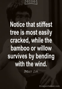 Notice-that-stiffest-tree-is-most-easily-cracked-while-the-bamboo-or-willow-survives-by-bending-with-the-wind