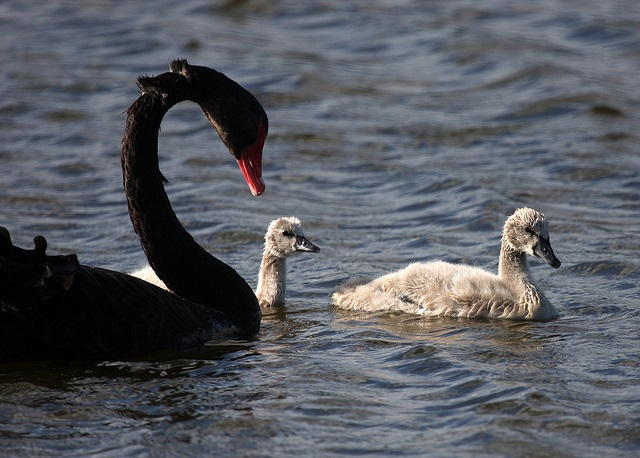Options trading black swan