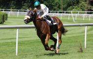 Horse Betting and Trading Similarities