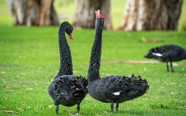 Was the Coronavirus Correction a Black Swan Event?